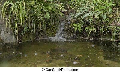 góra, forest., malowniczy, potok
