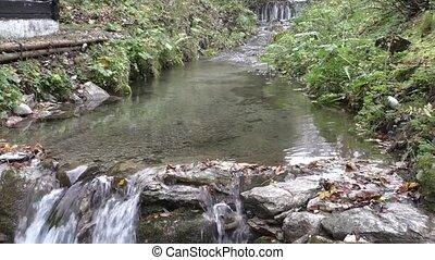 góra, las, potok