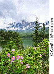 góra, narodowy park, jezioro, róże, jaspis, dziki