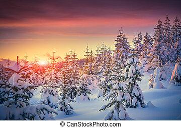 góra, zima, barwny świt, krajobraz, las