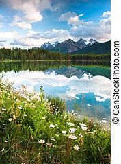 górska panorama, jeziorowy herbert