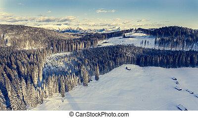góry, antena, zima, forest., nad, prospekt
