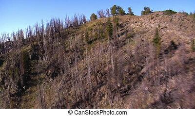 góry, antena, zmarłe drzewa, strzał, las