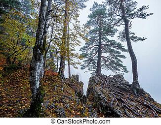 góry, mglisty, las, drzewa, kaprys