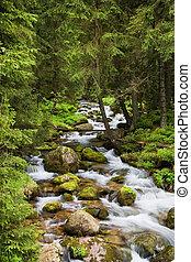 góry, tatra, potok, las