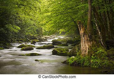 góry, wielki, odprężając, natura, dymny, park, gatlinburg, tn, spokojny, mglisty, tremont, rzeka, krajowy, krajobraz, scenics