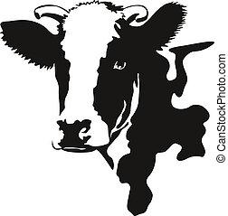 głowa, wektor, ilustracja, krowa