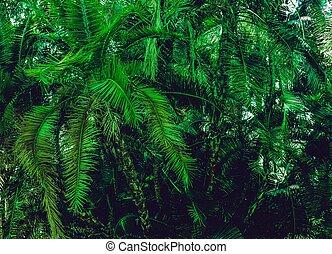 gałęzie, soczysty, tropikalny krzak, dłoń, tło, zielony