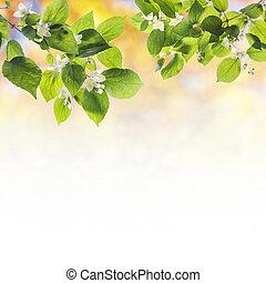 gałęzie, wiosna, drzewo, tło, flowering, śliczny