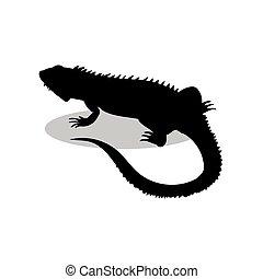 gad, sylwetka, jaszczurka, czarnoskóry, zwierzę, iguana