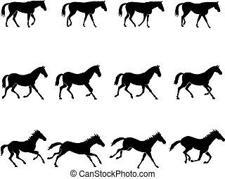 gaits, koń