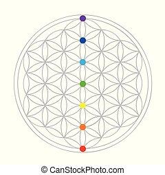 geometria, życie, kwiat, barwny