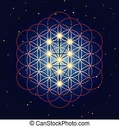 geometria, gwiaździsty, tło, poświęcony, niebo, życie, kwiat, drzewo