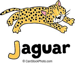 gepard, mały, abc, jaguar, albo