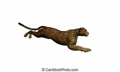 gepard, wyścigi