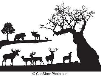 gnarled, drzewo, dziewiczość, odizolowany