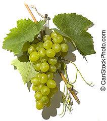 grono, winogrono
