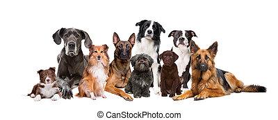 grupa, dziewięć, psy