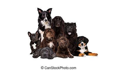 grupa, osiem, aparat fotograficzny, patrząc, psy