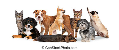 grupa, osiem, koty, psy
