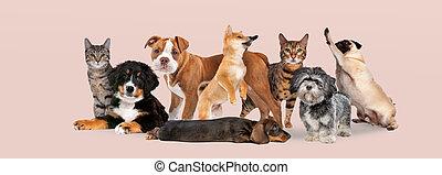 grupa, osiem, psy, koty