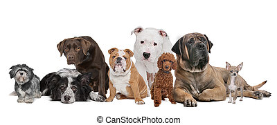 grupa, osiem, psy