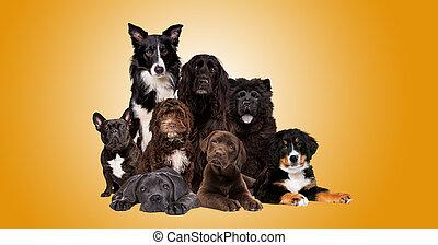 grupa, psy, aparat fotograficzny, patrząc, osiem