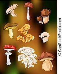 grzyby, komplet, wektor, fungi, barwny