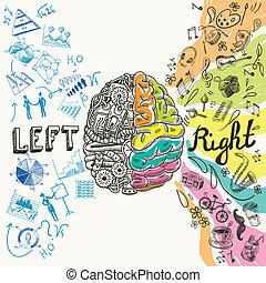 hemisfer, mózg, rys