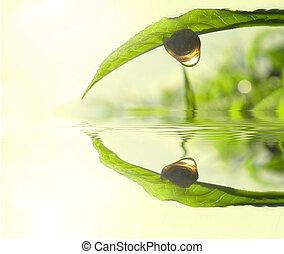 herbata, pojęcie, liść, zielony, fotografia