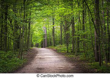 hiking, las, zielony, ciągnąć