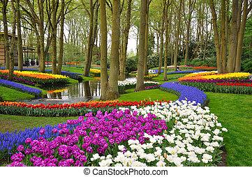 holandia, barwny, tulipany, park, rozkwiecony, keukenhof
