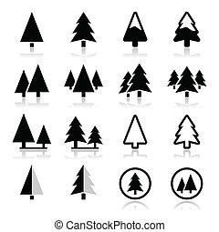 ikony, drzewo, komplet, wektor, sosna