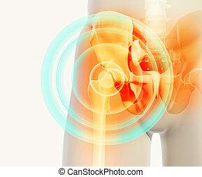 illustration., biodro, rentgenowski, bolesny, szkielet, 3d
