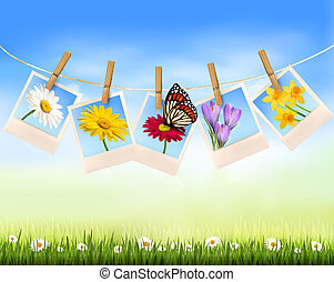 illustration., natura, fotografia, wektor, tło, kwiaty, butterfly.
