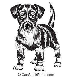 ilustracja, pies, obiekt, kolor, seter, odizolowany, wektor, tło, czarnoskóry, stylizowany, biały
