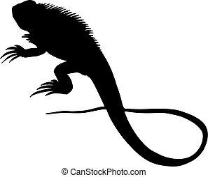 ilustracja, wektor, iguana, jaszczurka, sylwetka, znak, czarnoskóry