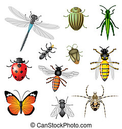 insekty, albo, infekcja wirusowa