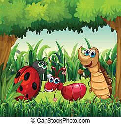 insekty, las
