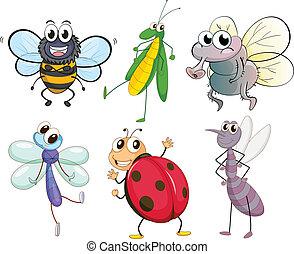insekty, różny