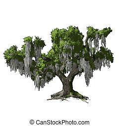 isolated., dąb, wektor, drzewo, ilustracja