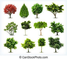 isolated., komplet, drzewa, wektor