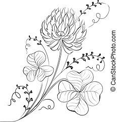 isolated., koniczyna, kwiaty