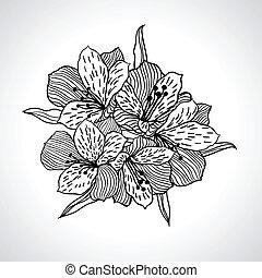 isolated., makro, kwiat, czarnoskóry, storczyk