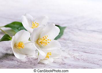 jaśmin, drewno, tło, kwiat, biały