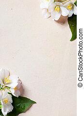 jaśmin, papier, kwiaty, stary, sztuka, tło, ułożyć, wiosna