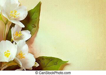 jaśmin, papier, wiosna, tło, stary, kwiaty