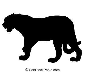 jaguar, sylwetka