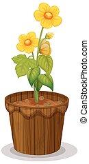 jaskier, kwiaty, doniczka, żółty