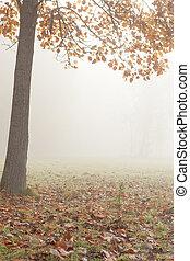 jasny, drzewo, -, jesień, mgła, krajobraz
